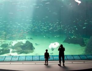 Oceanariumet